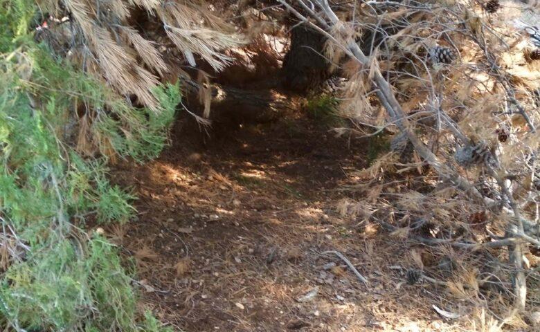 Φθινοπωρινή δραστηριότητα: Πικ νικ στο δάσος