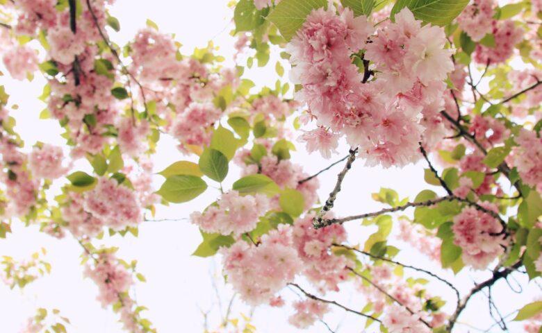4 Ανοιξιάτικες δραστηριότητες για τον Μάιο